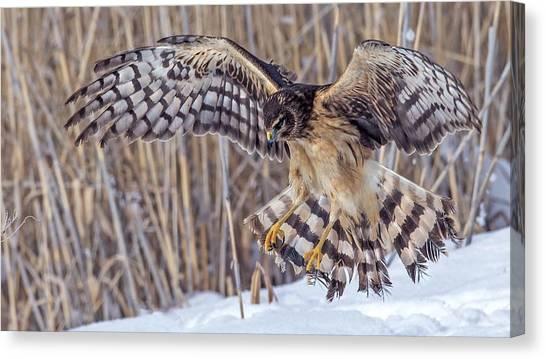 Hawks Canvas Print - Eagle by Maye Loeser
