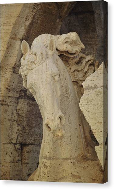 Navona Steed Canvas Print by JAMART Photography