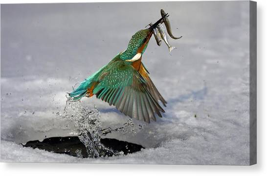 Pheasants Canvas Print - Kingfisher by Jackie Russo