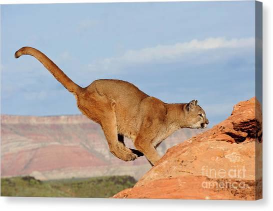 Mountain Lion Canvas Print by Dennis Hammer