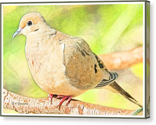 Mourning Dove Animal Portrait Canvas Print