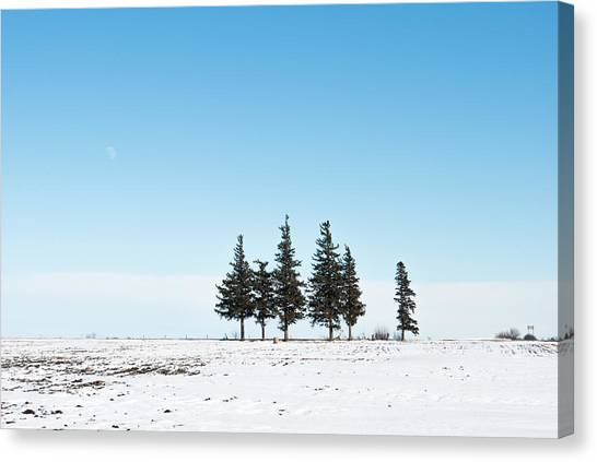 6 Pines And The Moon Canvas Print