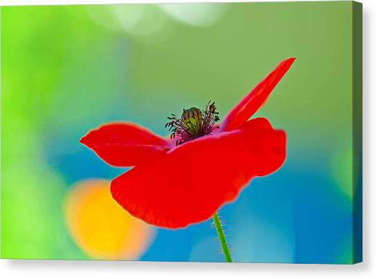 Decorativ Canvas Print - Poppy by Silke Magino