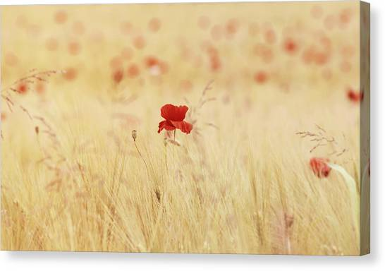 Ticks Canvas Print - Poppy by Super Lovely