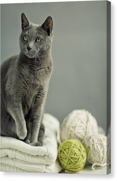 Purebred Canvas Print - Russian Blue by Nailia Schwarz