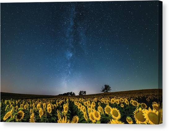 Sunflower Galaxy Canvas Print