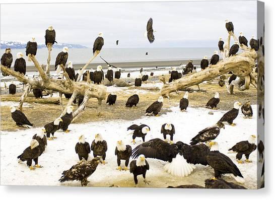 Storks Canvas Print - Bird by Mariel Mcmeeking