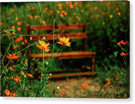 Galsang Flowers In Garden Canvas Print