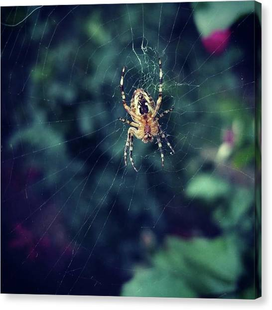 Spider Web Canvas Print - Spider Waiting by Daniel Castellanos