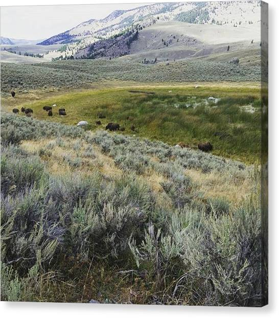 Rocky Mountains Canvas Print - Wyoming Is The Home Where The Bufflo Roam by Jonathan Stoops