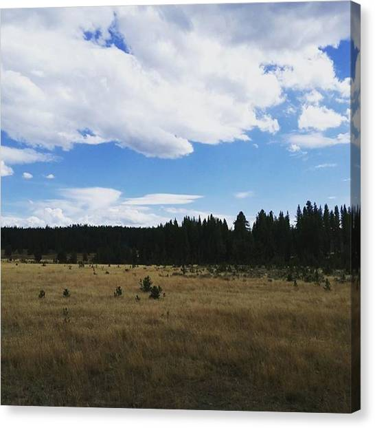 Rocky Mountains Canvas Print - Blue Sky Meets Golden Grass by Jonathan Stoops