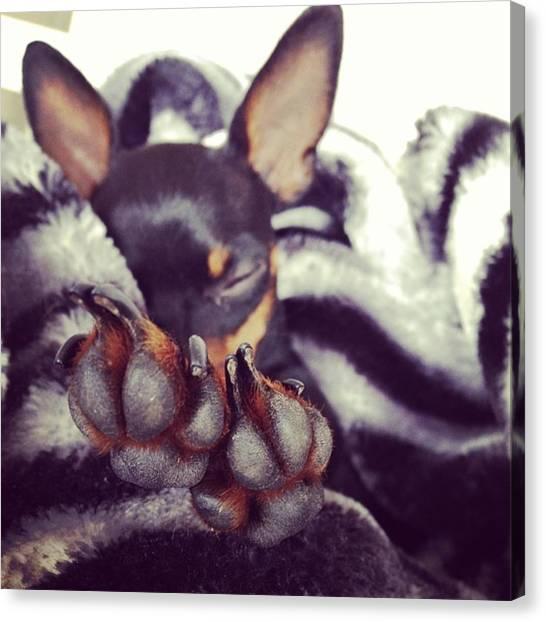 Binders Canvas Print - #little #dog #sleeping by Alex Binder