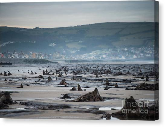 Bronze Age Sunken Forest At Borth On The West Wales Coast Uk Canvas Print
