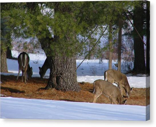 Fruit Trees Canvas Print - Deer by Jackie Russo