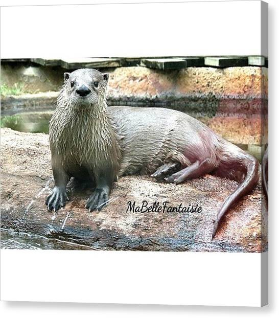 Otters Canvas Print - #igers #instagramers #instagood by Amber Villanueva