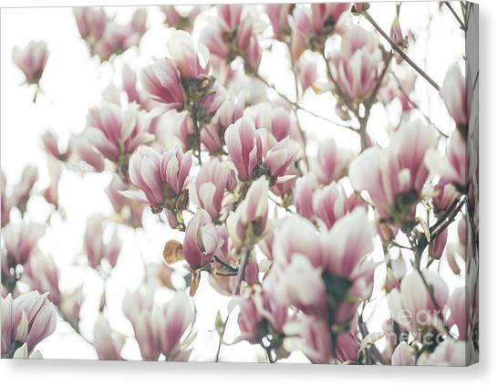 Mixed-media Canvas Print - Magnolia by Jelena Jovanovic