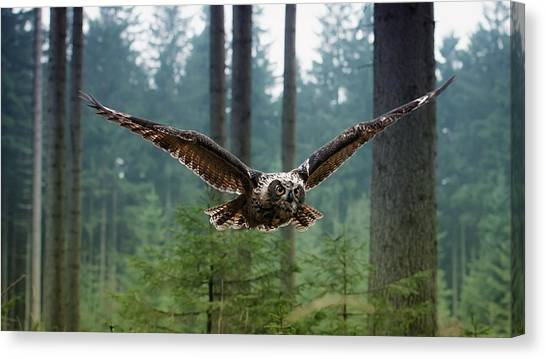Hawks Canvas Print - Owl by Jackie Russo
