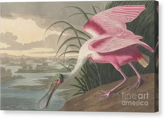 Spoonbills Canvas Print - Roseate Spoonbill by John James Audubon
