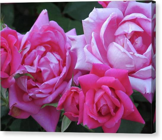 Roses Canvas Print by Michele Caporaso