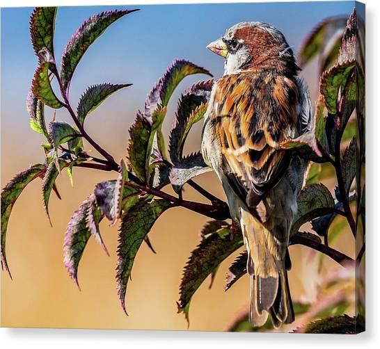 Hawks Canvas Print - Bird by Jackie Russo