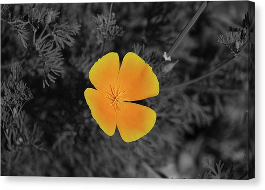 Canvas print featuring the photograph 7491 soc by splash of color