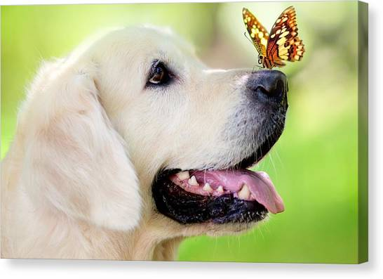 Golden Retrievers Canvas Print - Dog by Jackie Russo