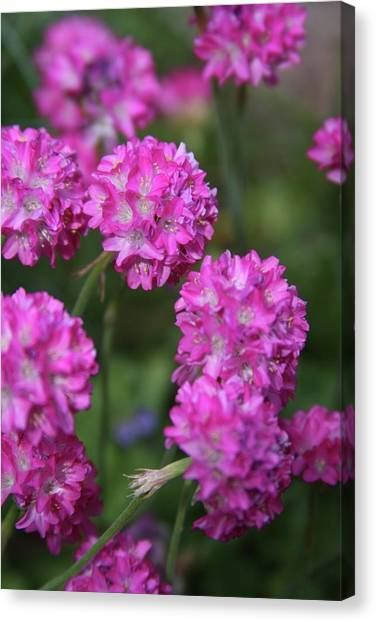 Flowers Canvas Print by Luke Robertson