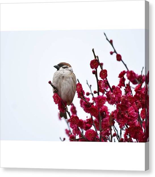 Sparrows Canvas Print - Instagram Photo by Megumi Nakamoto