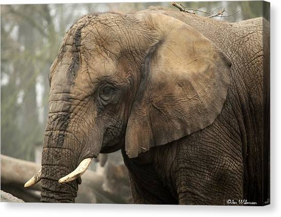 Ivory Canvas Print - Elephant by Jackie Russo