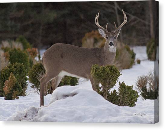 Canvas Print featuring the photograph 8 Point Beauty by Angel Cher