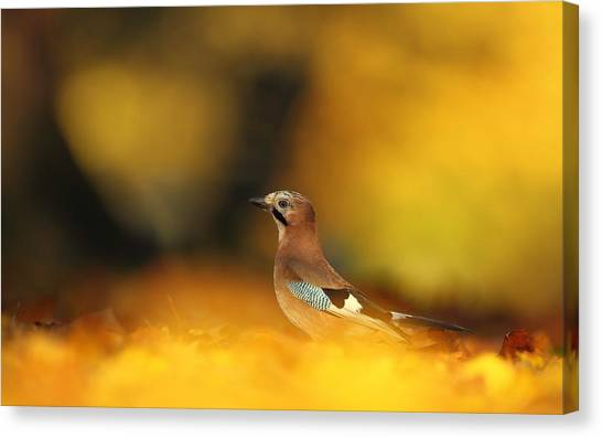 Wrens Canvas Print - Bird by Mariel Mcmeeking