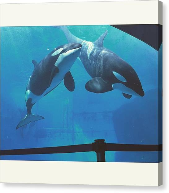 Orcas Canvas Print - Instagram Photo by Aa Ya Na