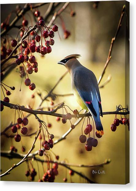 Woodpeckers Canvas Print - Bird by Jackie Russo