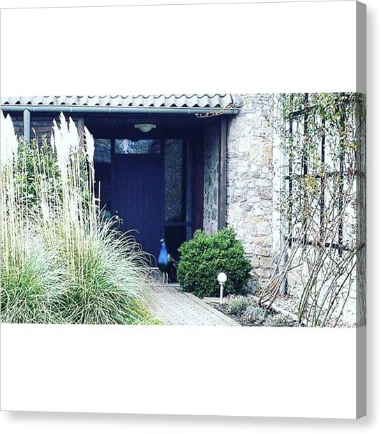 Peacocks Canvas Print - #germany #architecture #archilovers by Victoria Key