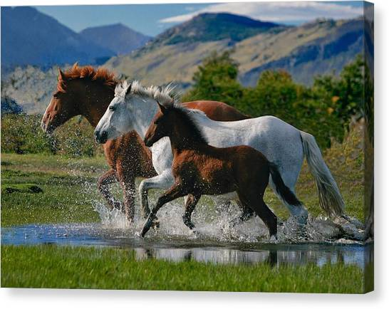 Farm Animals Canvas Print - Horse by Maye Loeser