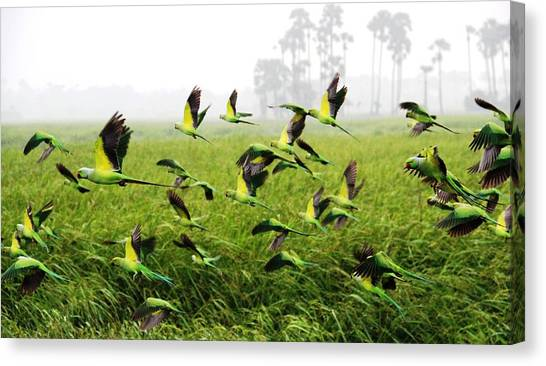 Storks Canvas Print - Parrot by Jackie Russo