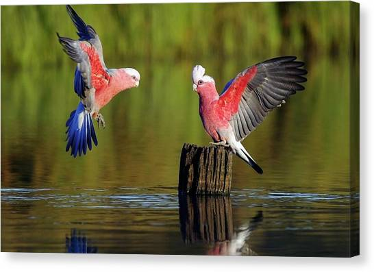 Spoonbills Canvas Print - Parrot by Mariel Mcmeeking