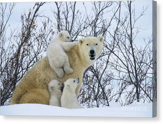 Care Bears Canvas Print - Polar Bear And Cubs by Jean-Louis Klein and Marie-Luce Hubert
