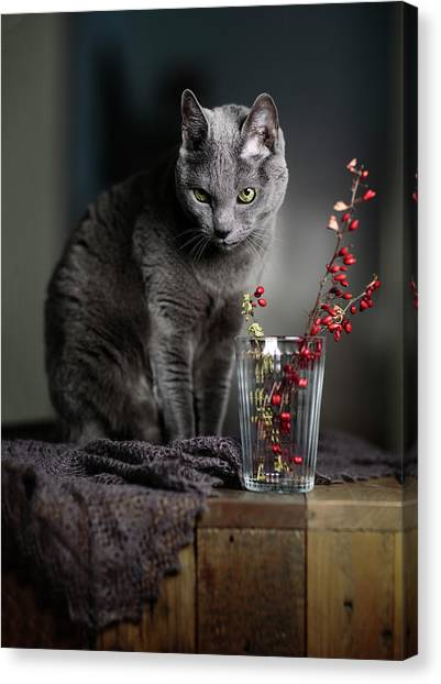 Russia Canvas Print - Russian Blue by Nailia Schwarz
