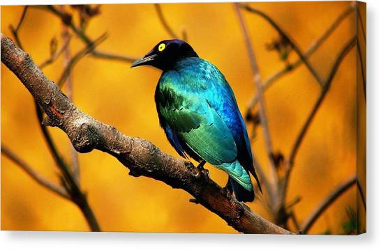 Starlings Canvas Print - Bird by Jackie Russo