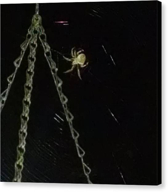 Spider Web Canvas Print - Night Time Friend by Alysa Cook