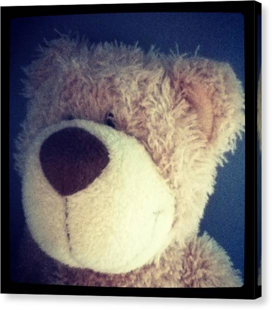 Teddy Bears Canvas Print - Instagram Photo by Katerina Penesi