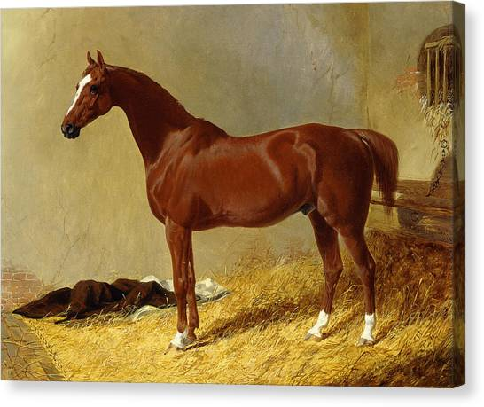 Race Horses Canvas Print - A Bay Racehorse In A Stall, 1843 by John Frederick Herring Snr