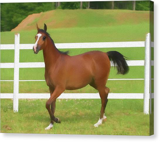 A Beautiful Arabian Filly In The Pasture. Canvas Print