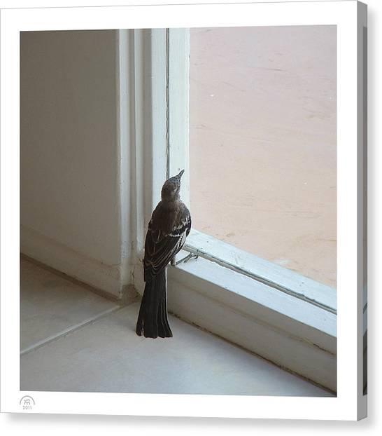 A Bird At A Plate Glass Window Canvas Print