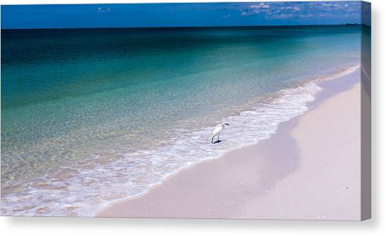 A Bird In Paradise Canvas Print