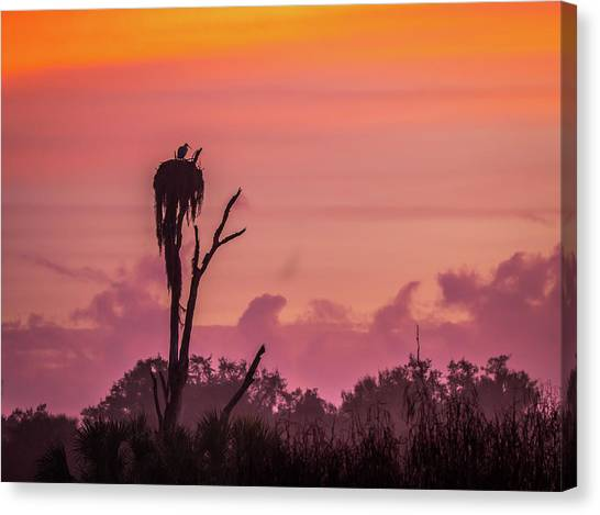 A Birdie Morning Canvas Print
