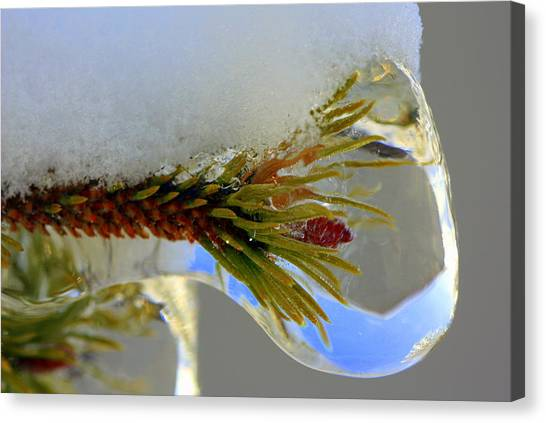 A Bit Icy Out There Canvas Print