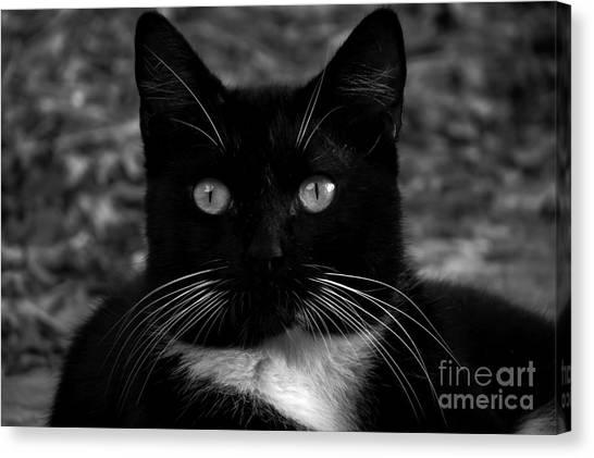 A Black Cat's Life -florida Canvas Print
