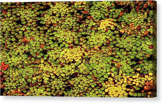 A Botanical Mosaic Canvas Print